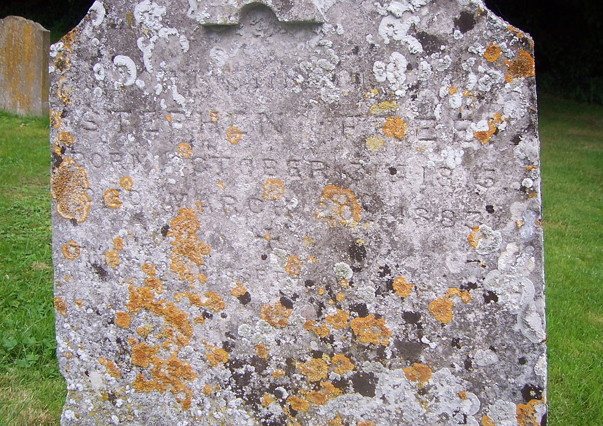 Headstone of Stephen Free (1815-1883) in Hadstock, Essex